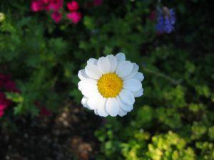 flower-65